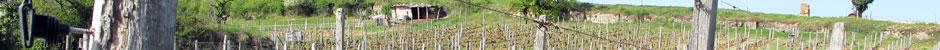 Vignerons du Bugey