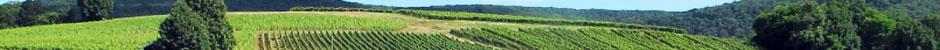 Vignerons du Jura